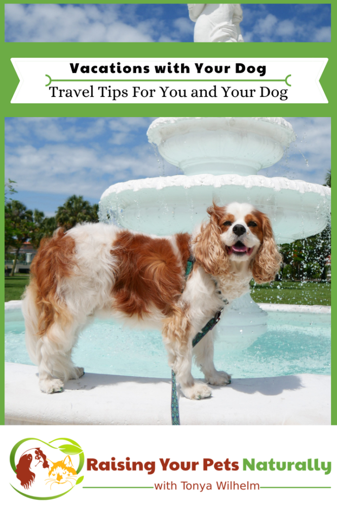 Travel Tips For You and Your Dog