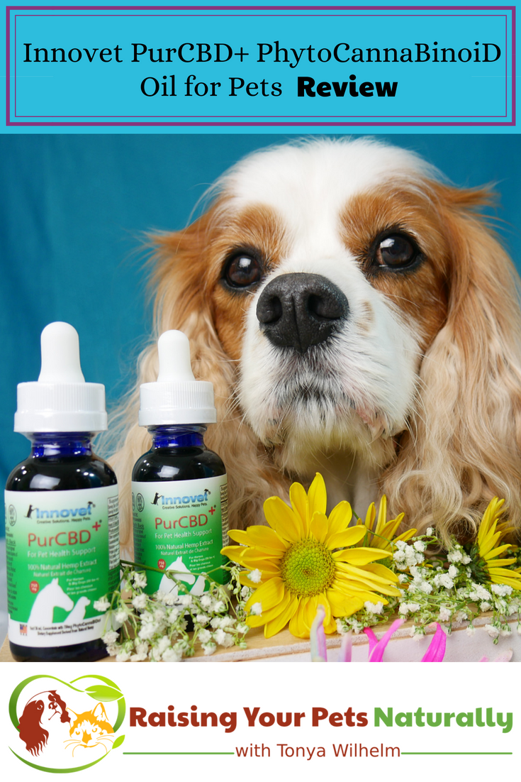 Innovet PurCBD+ PhytoCannaBinoiD Oil for Pets Review. Learn how to find the best CBD oil for your dog or cat. #raisingyourpetsnaturally #cbdfordogs #hemp #cbd #cbdoil #cbdoilfordogs #cbdoilforpets