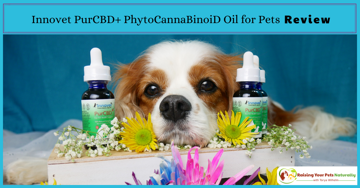 Innovet PurCBD+ PhytoCannaBinoiD Oil for Pets Review. Learn how to find the best CBD oil for your dog or cat. #raisingyourpetsnaturally