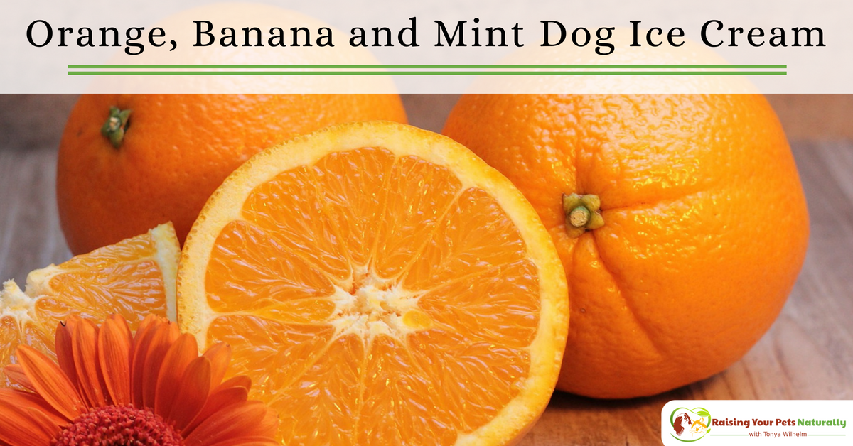 Healthy Dog Ice Cream Recipes You Can Share. Orange, banana and mind dog ice cream recipe. #raisingyourpetsnaturally