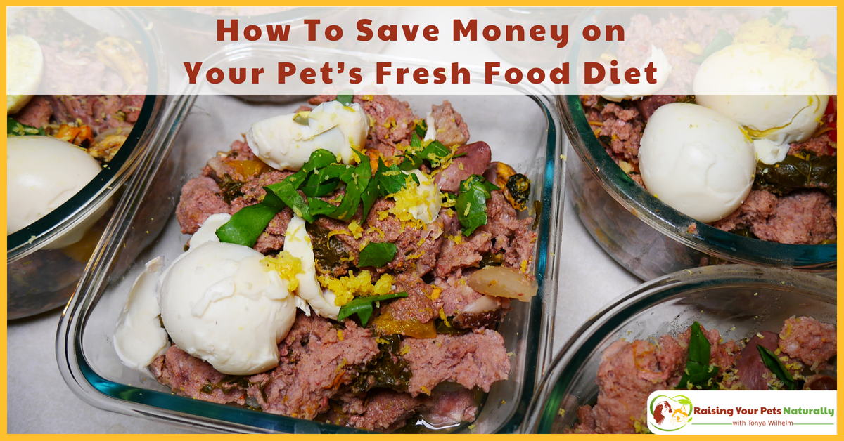 How To Save Money on Your Pet's Fresh Food Diet