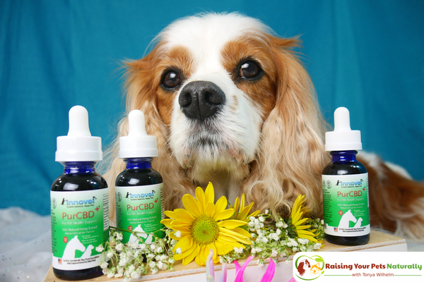 Treating dog arthritis naturally