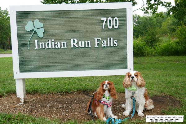 Dog friendly vacations in Dublin, Ohio