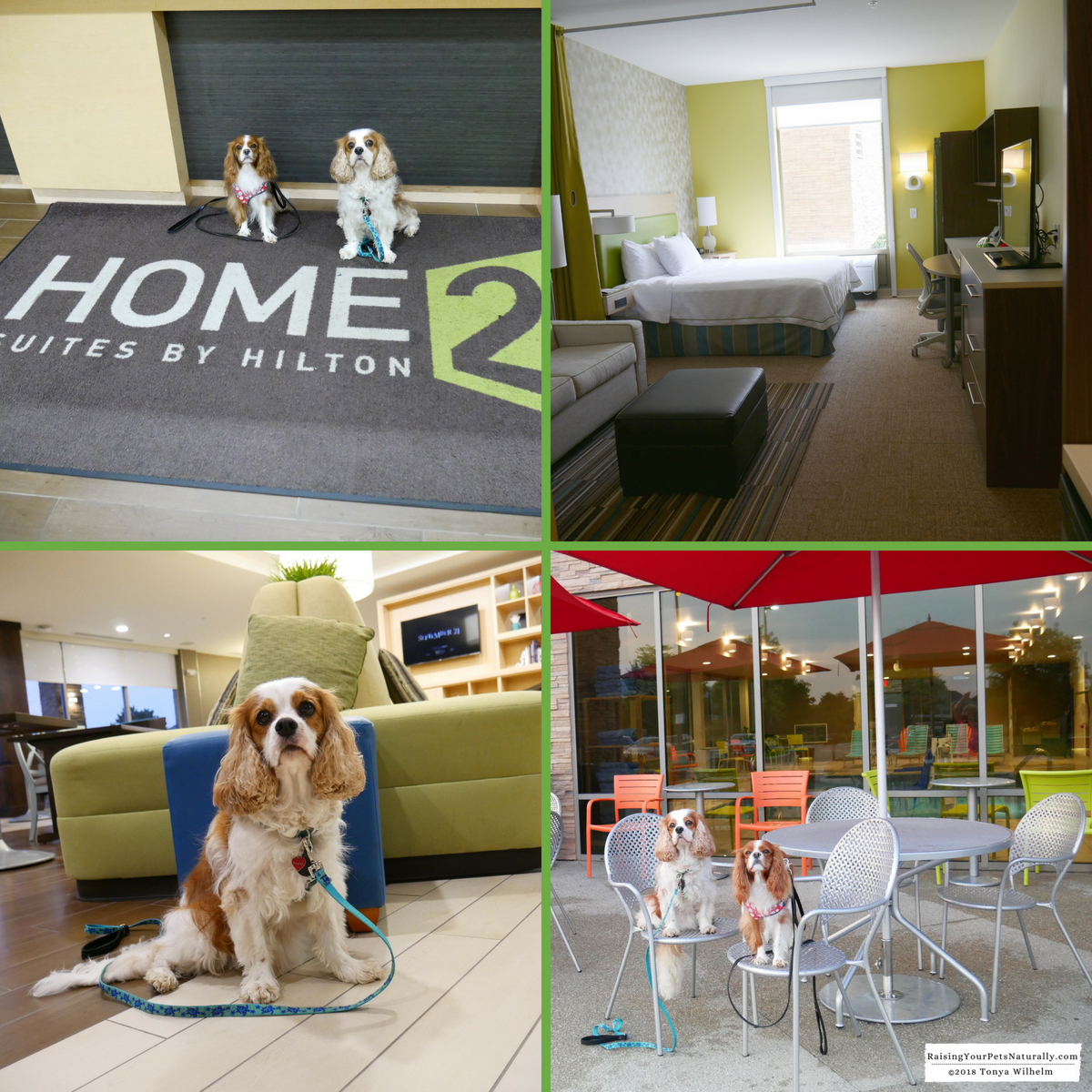 Luxury pet-friendly hotels in Ohio