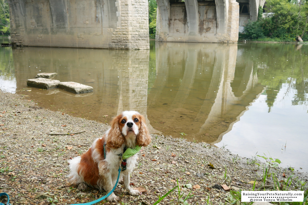 Best places to visit in Dublin, Ohio with a dog