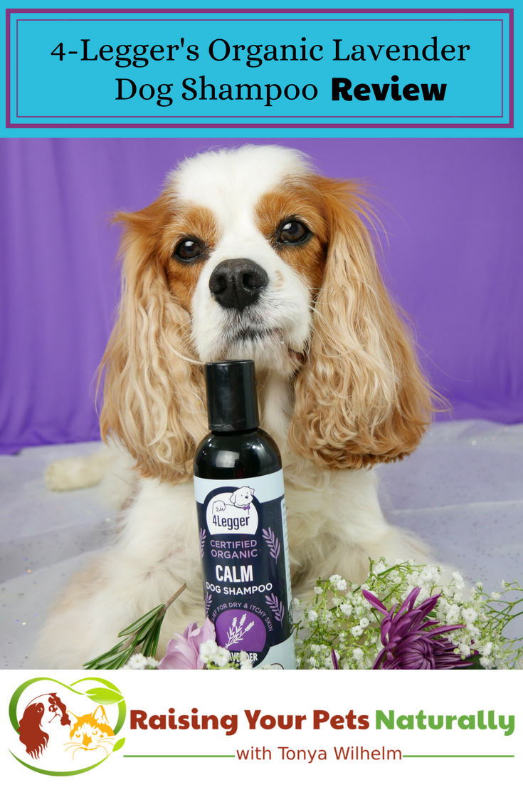 Best organic and natural dog shampoo for dry skin on dogs. 4-Legger USDA Certified Organic Lavender Dog Shampoo Review. #raisingyourpetsnaturally #dryskinondogs #dogdandruff #dogdryskinhomeremedy #organicdogshampoo #naturaldogshampoo