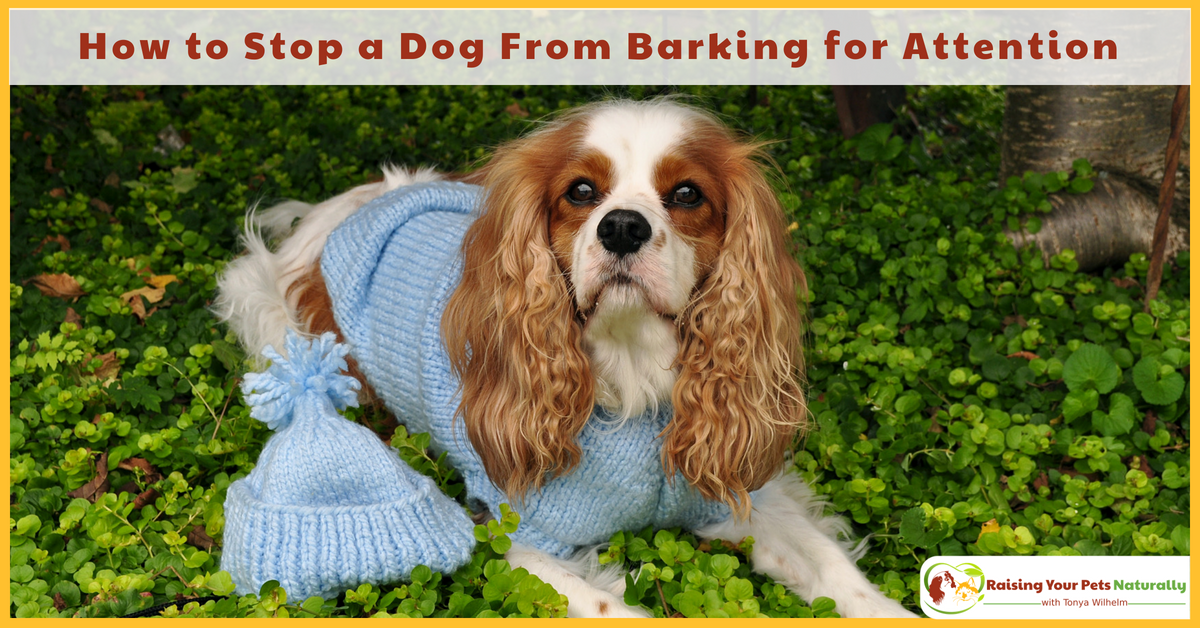 How to Stop a Dog From Barking for Attention