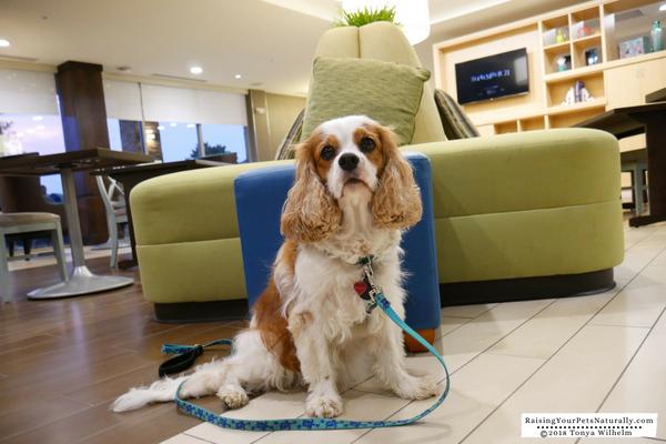 Pet-Friendly Hotels in Dublin, Ohio-Home2 Suites Dublin