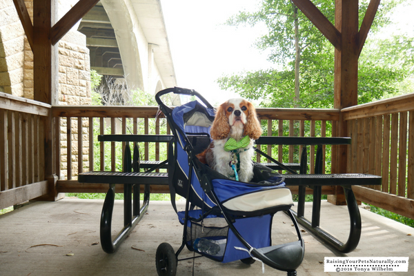 Dog-friendly parks in Dublin, Ohio
