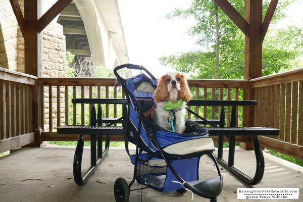 Dog-friendly parks in Dublin, Ohio