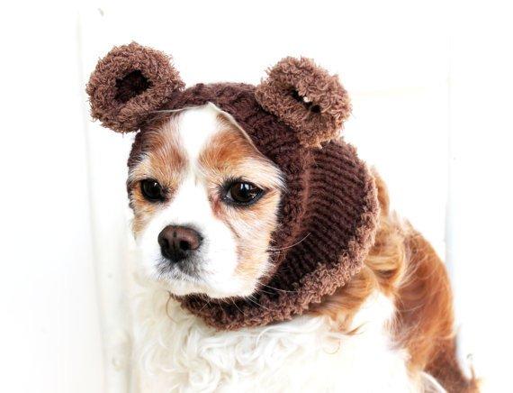 Best dog giveaways on the blog