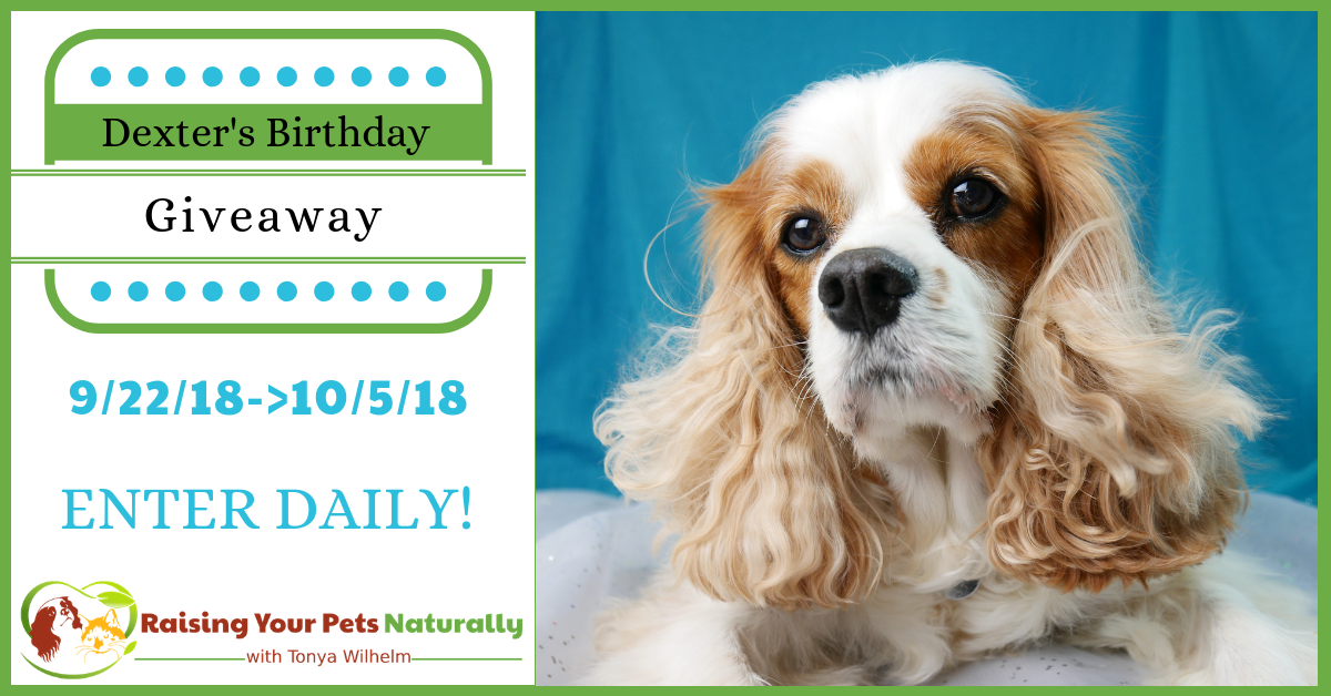 Dexter The Dog's Birthday Blog Giveaway Pet Contest 2017. Help me celebrate Dexter's ninth birthday! This year I will be hosting a giveaway to honor Dexter. #raisingyourpetsnaturally