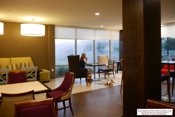 Dog-friendly hotel chains that are nice