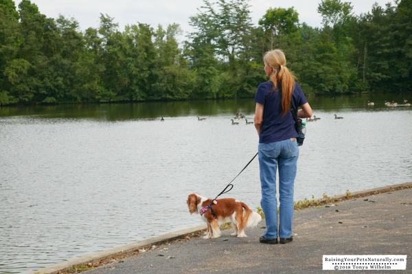 Dog parks in Columbus, Ohio