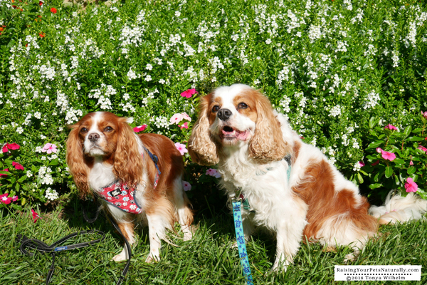 Dog friendly activities in Columbus, Ohio-Midwest