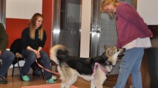Dog & Cat Training & Behavior
