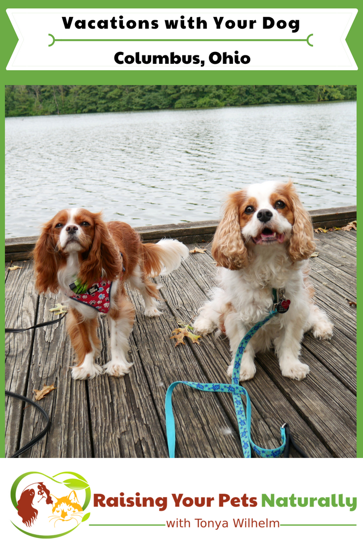 Dog-Friendly Vacations in the Midwest. Columbus, Ohio Dog-Friendly Travel Guide. #raisingyourpetsnaturally #dogfriendly #dogfriendlyvacations #petfriendlyvacations #dogfriendlycolumbus #dogfriendlyohio #dogfriendlymidwest #roadtripwithdogs #ohioroadtrip #columbusroadtrip