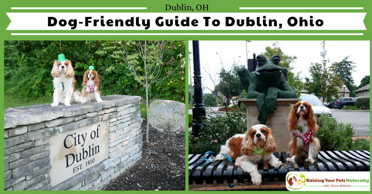 Best dog-friendly destinations in the Midwest