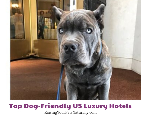 Dog-friendly Maryland hotels