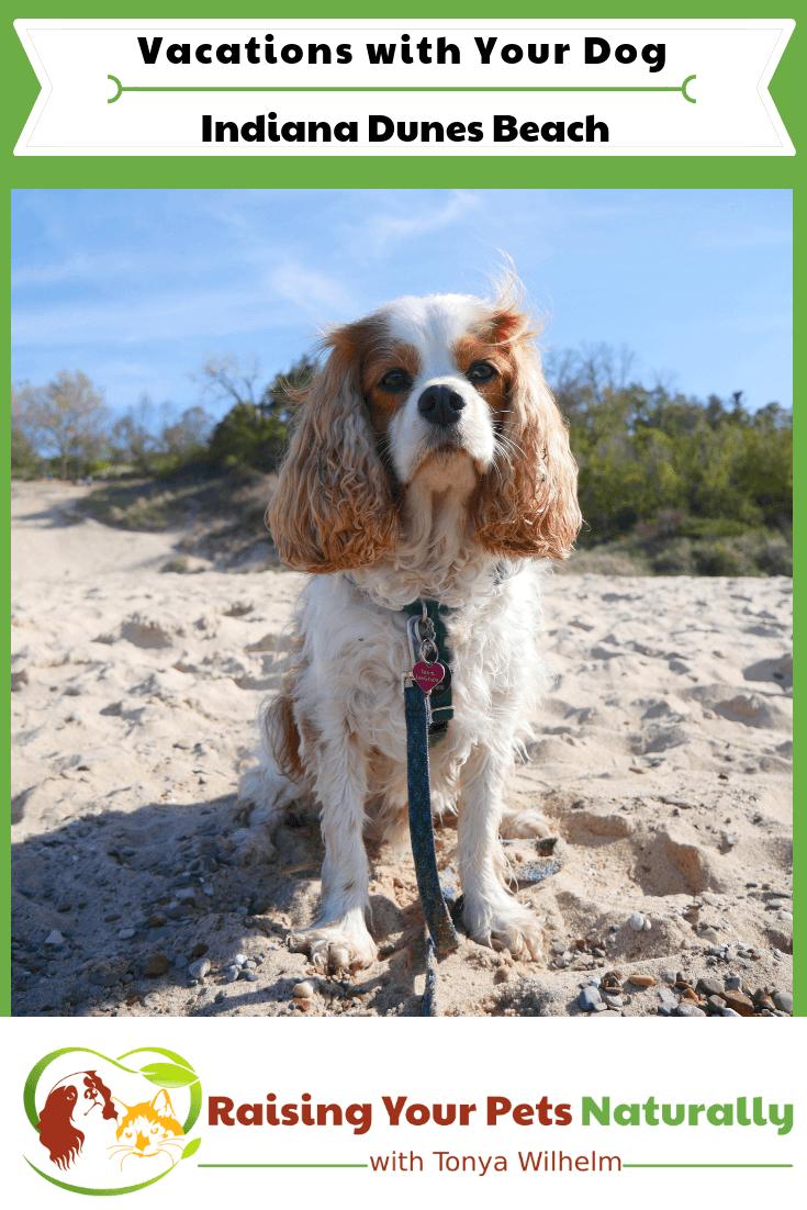 Dog-Friendly Indiana Dunes Beaches | Dog-Friendly Road Trip on Lake Michigan