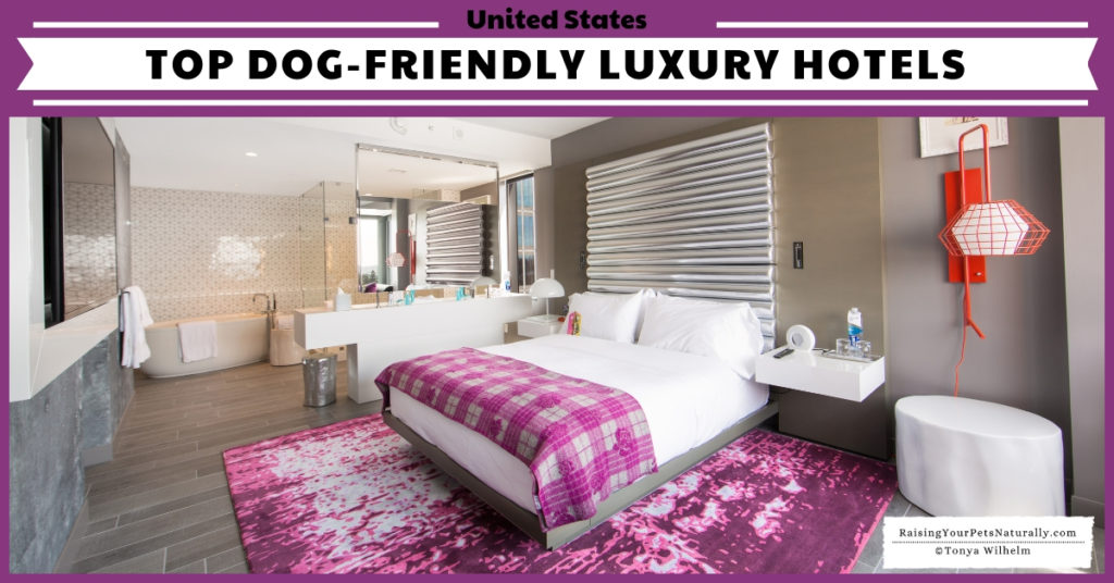If you are planning a dog-friendly road trip in the US, you might want to check some of these Dog-friendly luxury spa hotels and accommodations. Who says you have to stay in a cheap flea-infested hotel if you have a dog? #raisingyourpetsnaturally