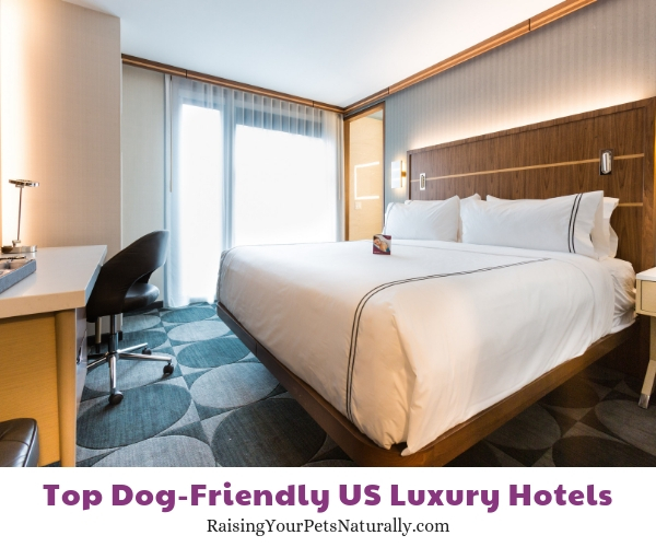 dog friendly accommodations Crowne Plaza HY36