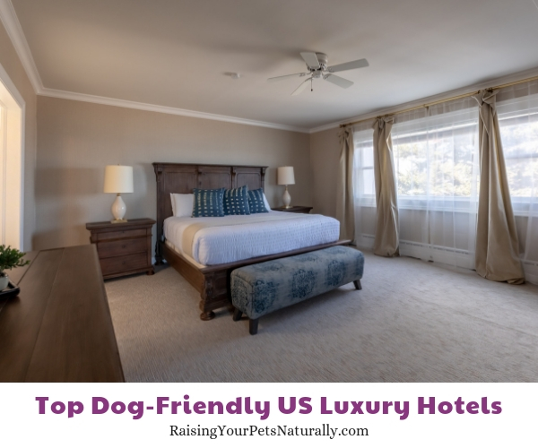 Dog friendly resorts in Michigan