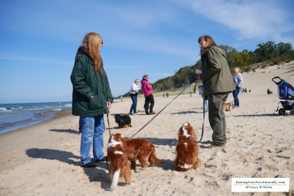 Dog-Friendly Indiana Dunes Beaches. Check out Dexter's dog-friendly road trip to the Indian Dunes. A must do for the dog-lover. #raisingyourpetsnaturally
