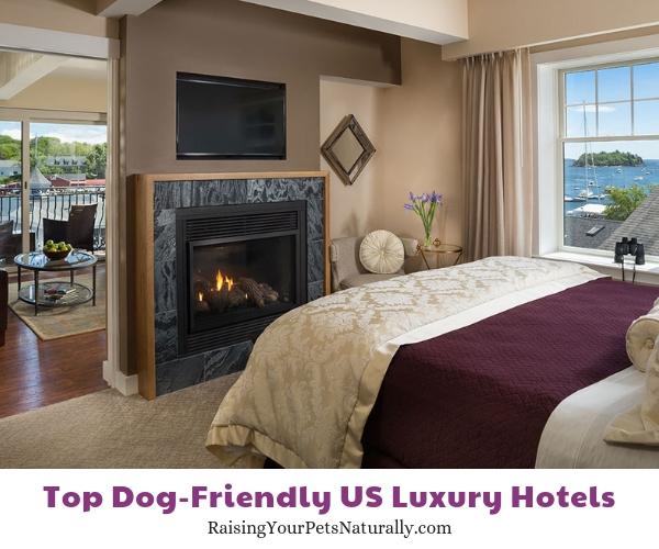 dog friendly resorts 16 Bay View