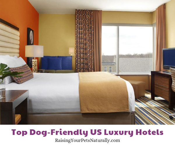 Five star dog-friendly hotels in Montana