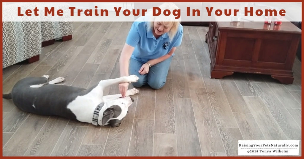 Toledo Metro Private Dog Training and Trainers | Alternative to Toledo Board and Train and Drop-Off Dog Training. Positive and effective dog training in your home.