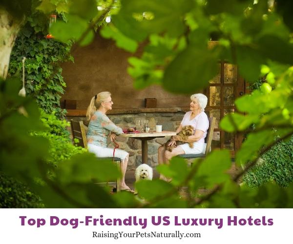 Pet-friendly hotels in Arizona.