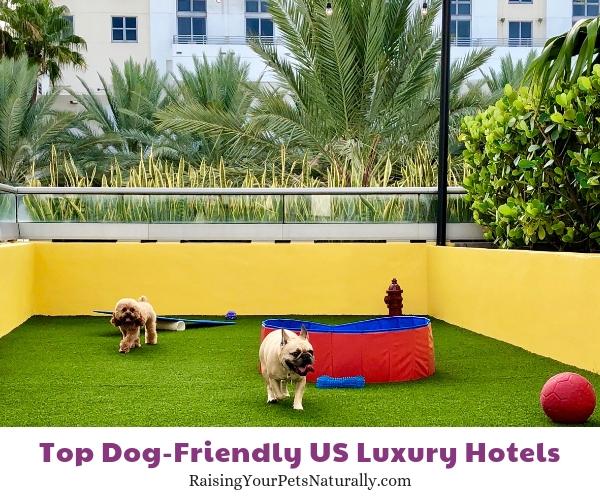 Dog friendly Florida Hotels