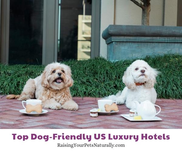 Dog friendly Georgia hotels and spas