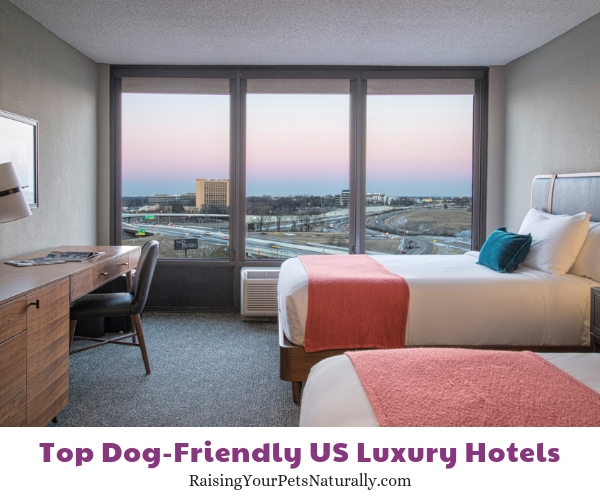 Dog-friendly luxury hotels in Tennessee