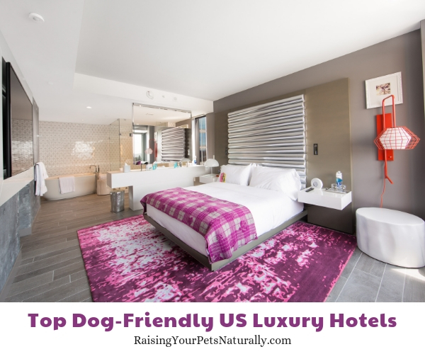 Luxury hotels that are pet-friendly in the US.