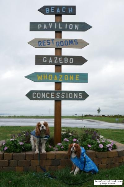 Dog-friendly Northern Indiana things to do along Lake Michigan. Dog-friendly South Shore things to see and do. #raisingyourpetsnaturally