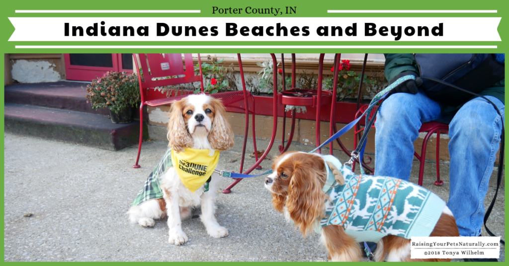 Dog-Friendly Indiana Dunes Beaches and Beyond. Check out Dexter's off the beaten path road trip to the Indiana Dunes region. #raisingyourpetsnaturally #indianadunes #beachesandbeyond #dogfriendly #dogfriendlyindiana #midwestvacations #dogfriendlyvacations #dogfriendlyroadtrips