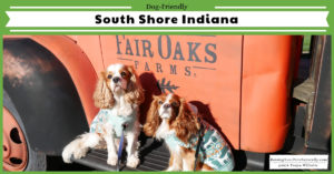 Dog-friendly Norther Indiana things to do along Lake Michigan. Dog-friendly South Shore things to see and do. #raisingyourpetsnaturally