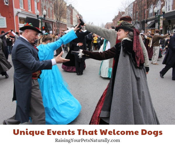 Things to do in Franklin Tennessee with your dog