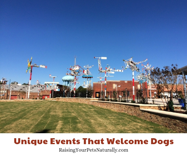 Downtown Beats & Eats is a fall concert series dogs allowed