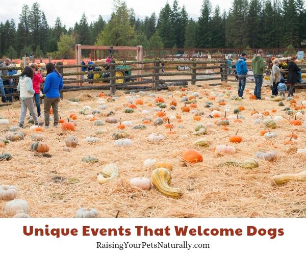 Dog friendly events in washington