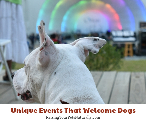Festivals that allow dogs in Memphis Tennessee