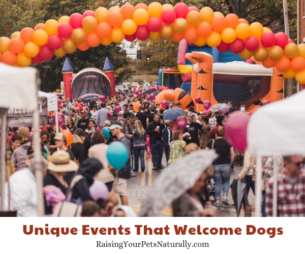 Pumpkinfest, Franklin, Tennessee dog policy