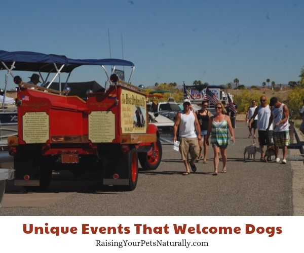 Fun activities to take your dog in Arizona