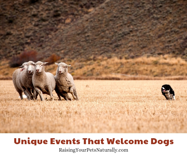 Can dogs attend The Trailing of the Sheep Festival, Hailey, Idaho