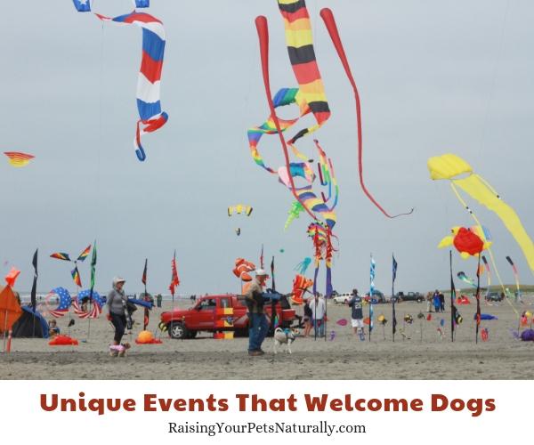 Dog-friendly events in Washington