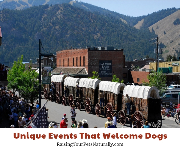 Dog-friendly Ketchum Idaho events