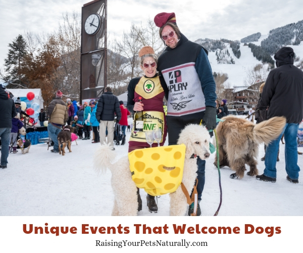 Wintersköl™,Aspen, Colorado- allows dogs