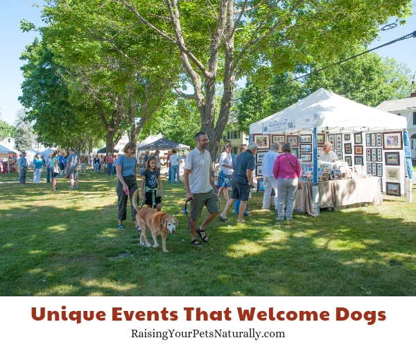 Pet-friendly attractions in Maine